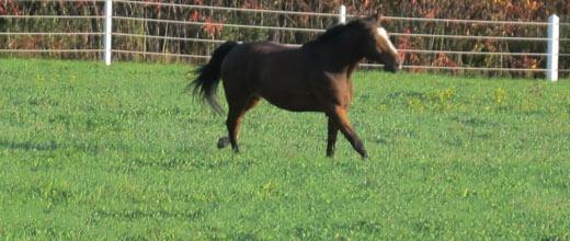 Horsemanship au naturel
